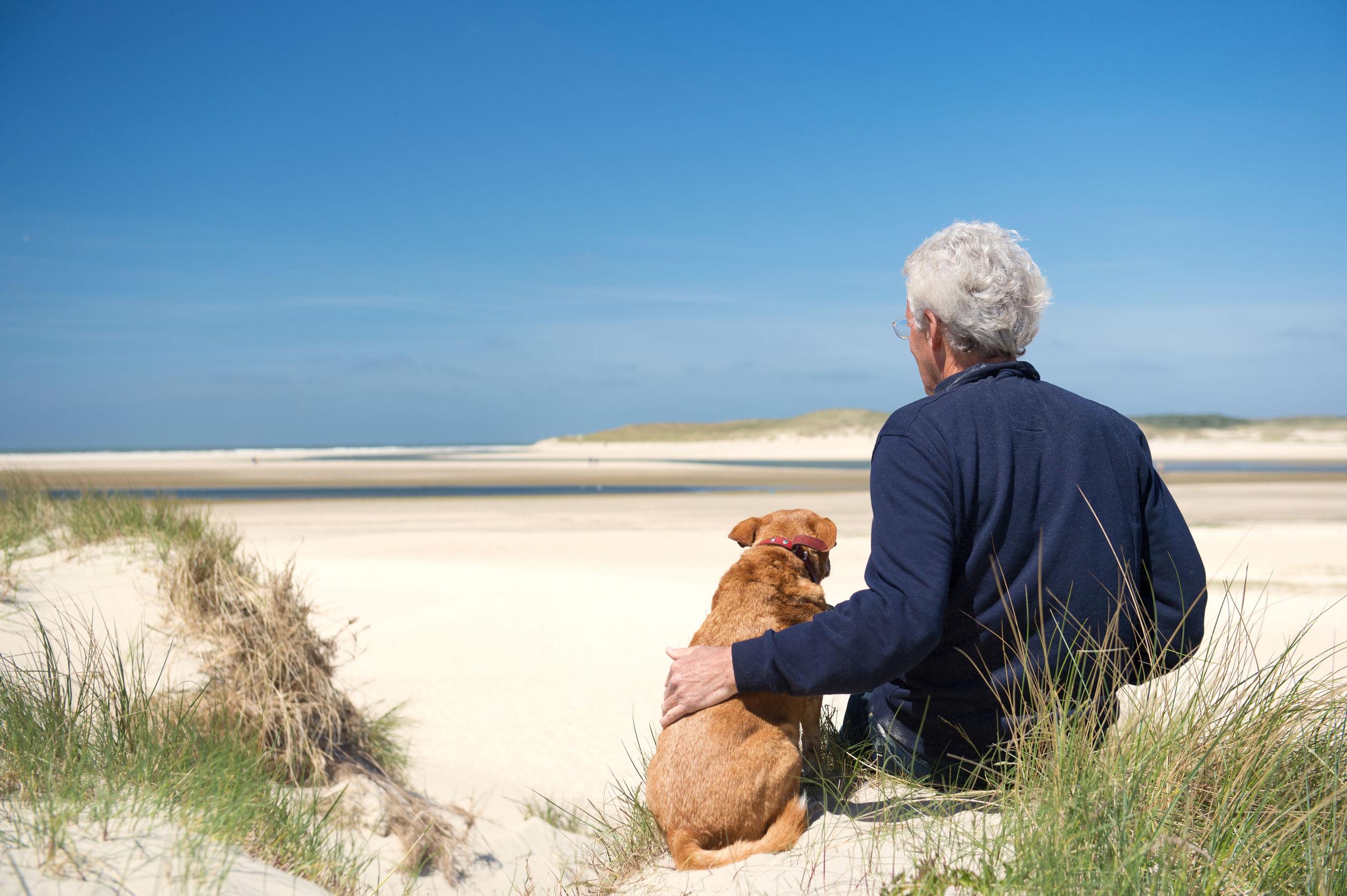 beneficios terapia con perros,