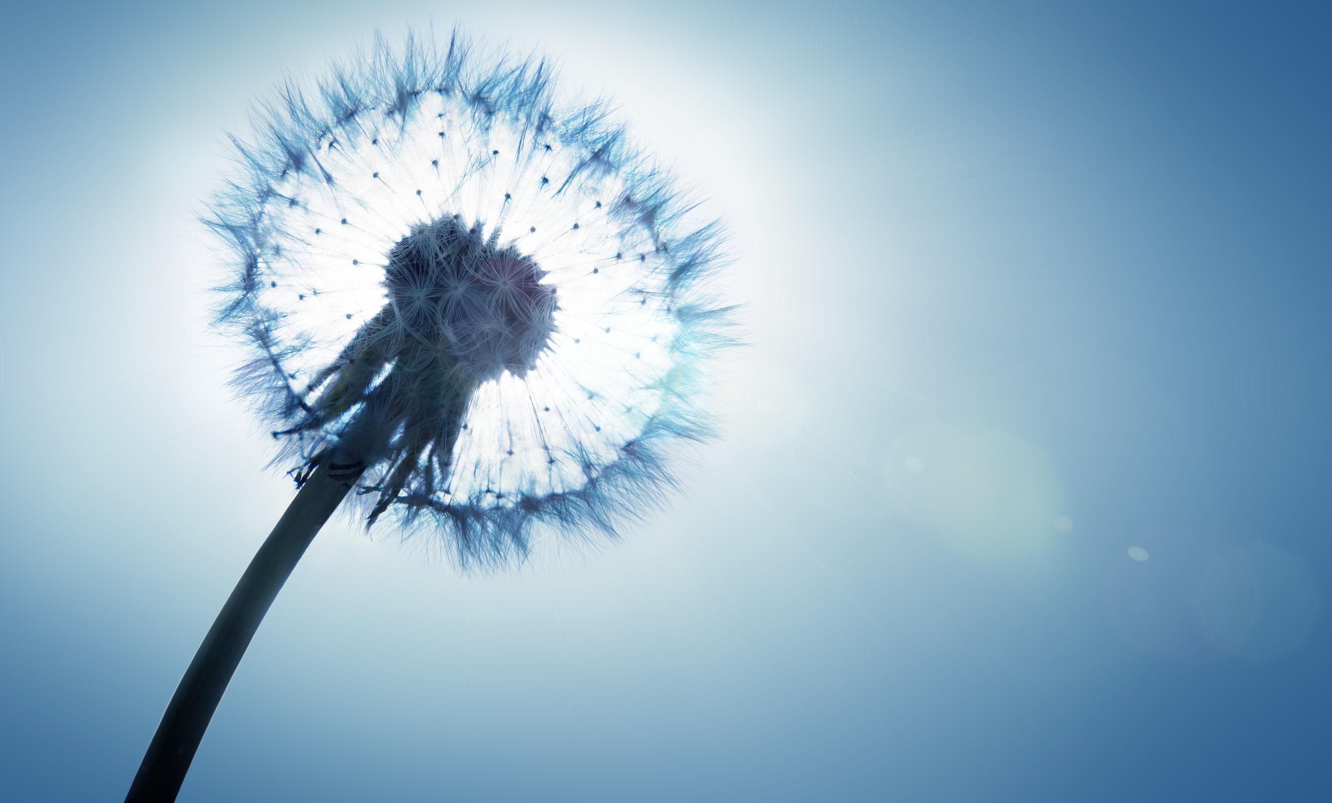 flor primavera, alergia, asma,